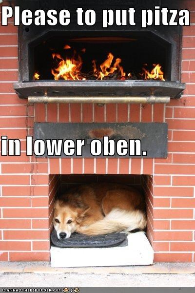 mixed breed,outside,oven,pizza,pizza oven