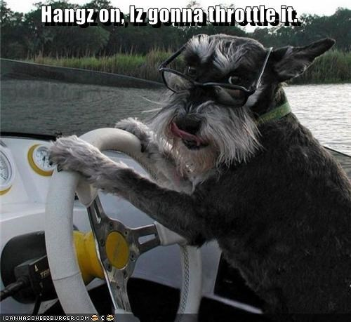 boat driving driving boat glasses schnauzer speed demon