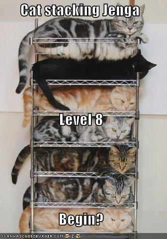 begin caption captioned cat Cats eight jenga level stacking - 5102002432