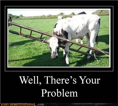 cow,hilarious,ladder,stuck