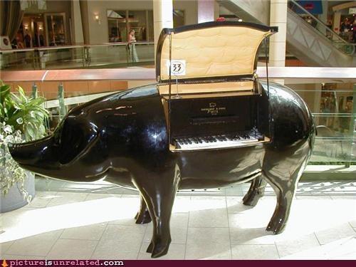 piano pig porcine wtf - 5102018560