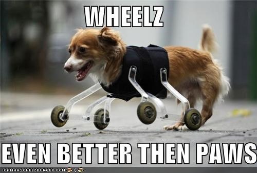 WHEELZ EVEN BETTER THEN PAWS.