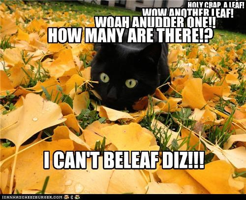 believe cant caption captioned cat leaf leaves prefix pun - 5102150400