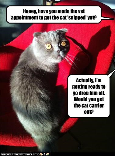 Honey, have you made the vet appointment to get the cat 'snipped' yet? Actually, I'm getting ready to go drop him off. Would you get the cat carrier out?