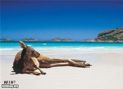 beach chill kangaroo lounging relax