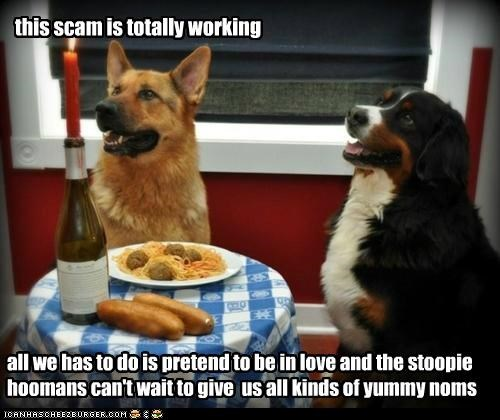 awesome,bernese mountain dog,food,german shepherd,happy dog,happy dogs,lady and the tramp,noms,people food,scam,spaghetti