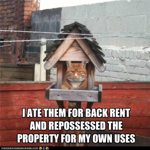 ate back birdhouse birds caption captioned cat explanation personal property rent repossessed tabby uses