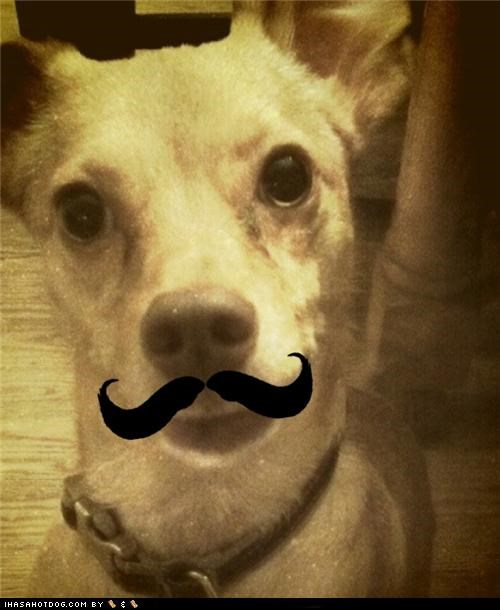 dapper mixed breed mustache si si si sweet mustache whatbreed - 5102531328