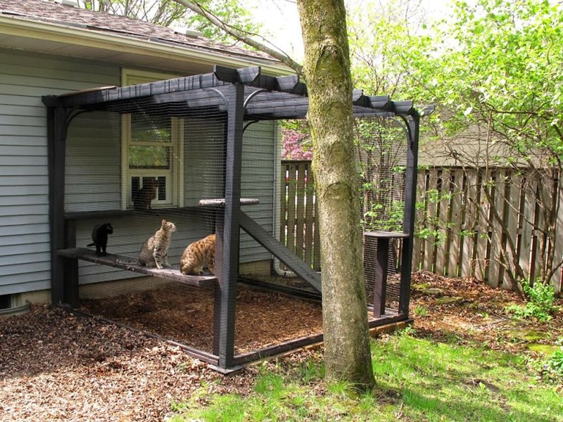 nature catio blind Cats - 5102597