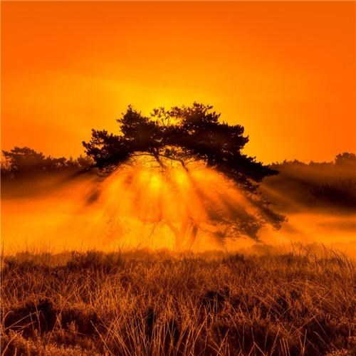 africa,bush,dawn,Focus magazine,light,orange,safari,sunbeam,tree