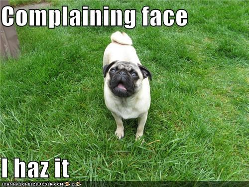 complaining,not fair,outdoors,pug,what