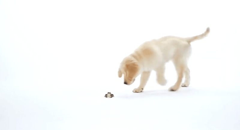 cute gifs of puppies meeting other kind of animals
