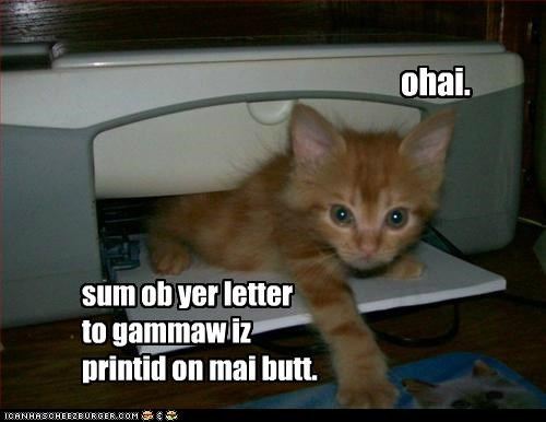 butt caption captioned cat grandma kitten letter location ohai oops printed printer some tabby