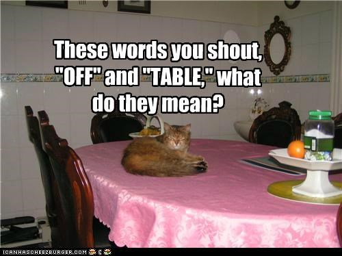 caption captioned cat mean meaning nhot off question shout table these what words - 5103378432