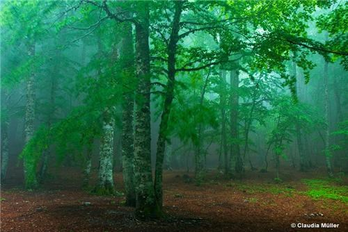 Calabria europe fog getaways green Italy mist national park pollino national park trees - 5103590400