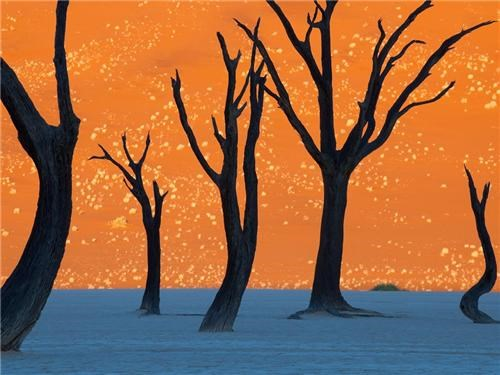 africa,Camel Thorn Trees,getaways,Namibia,Namib-Naukluft Park,national geographic,orange,sand dune,South Africa