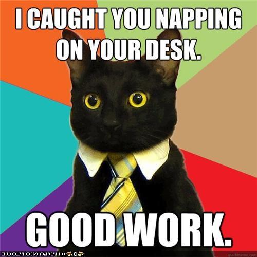 best of the week Business Cat desks memecats Memes naps Office sleep - 5103956992
