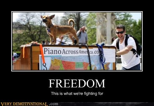 dogs fighting freedom hilarious