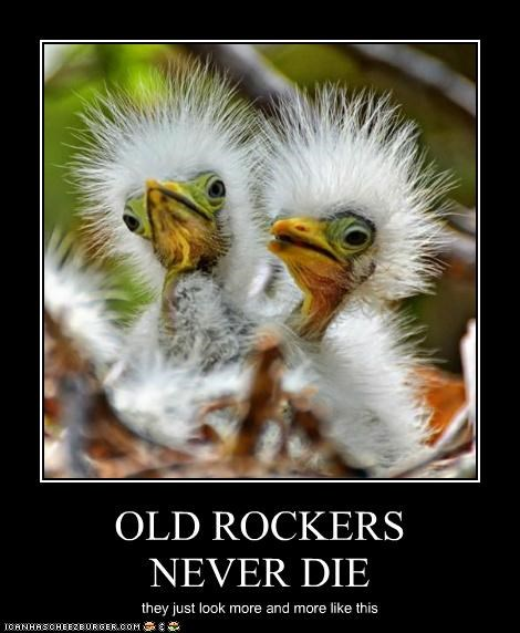 OLD ROCKERS NEVER DIE they just look more and more like this