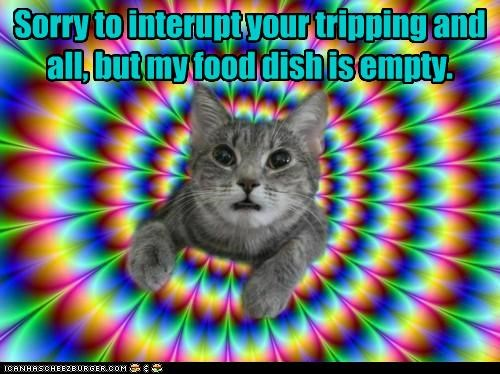 best of the week,caption,captioned,cat,dish,empty,food,Hall of Fame,interrupt,interrupting,psychedelic,sorry,tripping