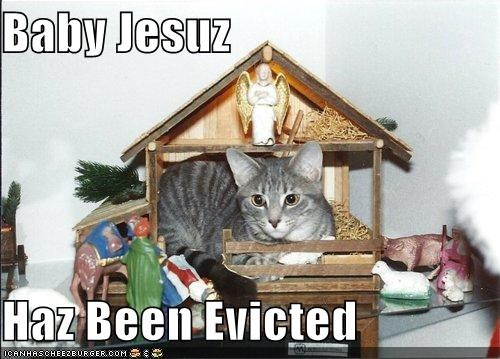 animals,Cats,eviction,I Can Has Cheezburger,jesus,Nativity