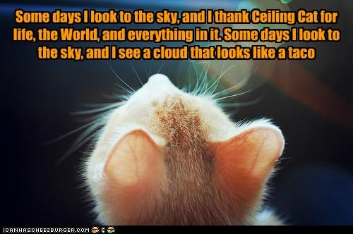 Some days I look to the sky, and I thank Ceiling Cat for life, the World, and everything in it. Some days I look to the sky, and I see a cloud that looks like a taco