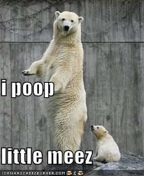 bears,lolar bears,mini me,poop