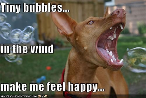 bubbles,fun,happy,happy dog,italian greyhound,outdoors,outside,playing,tiny bubbles