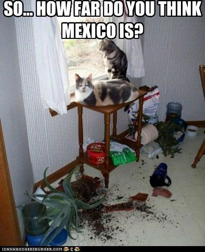SO... HOW FAR DO YOU THINK MEXICO IS?