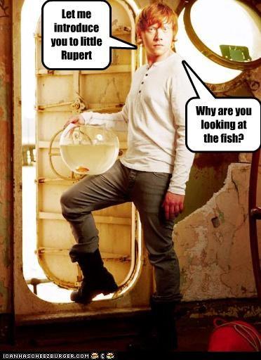 actor celeb funny rupert grint - 5105879552
