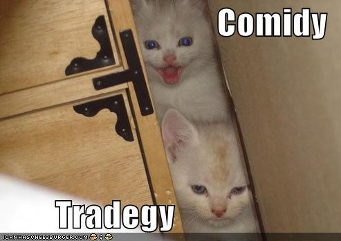 comedy,kitten,lolcats,lolkittehs,tragedy