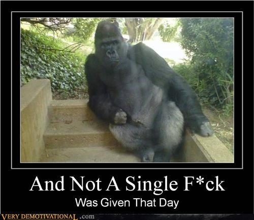 ape,dont-care,gorilla,Pure Awesome