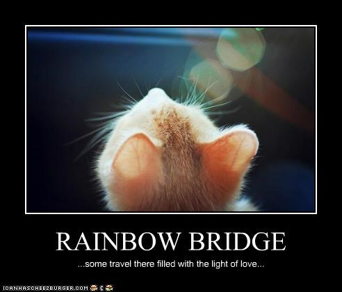 RAINBOW BRIDGE ...some travel there filled with the light of love...