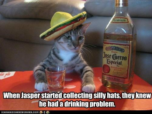 alcohol,animals,Cats,drinking,hats,I Can Has Cheezburger,problem,silly,tequila