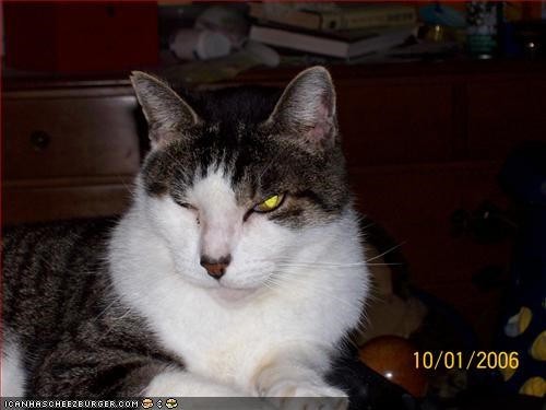 Cheezburger Image 510621696
