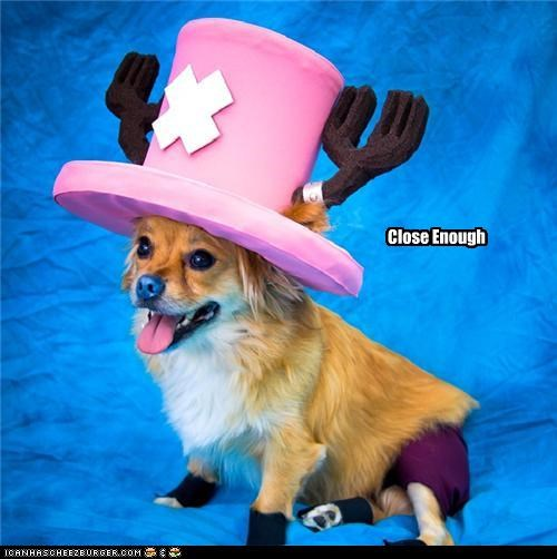 animals,cosplay,costume,dogs,i has a hotdog,tony chopper