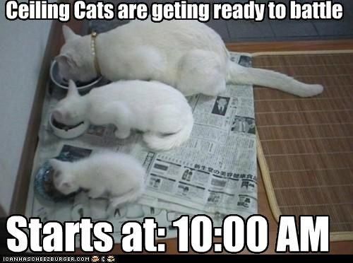 Ceiling Cats are geting ready to battle Starts at: 10:00 AM