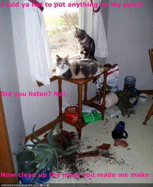 I told ya not to put anything on my perch Did you listen? No! Now clean up the mess you made me make