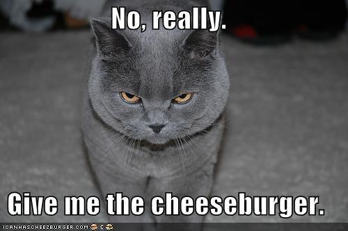 Cheezburger Image 5106690048