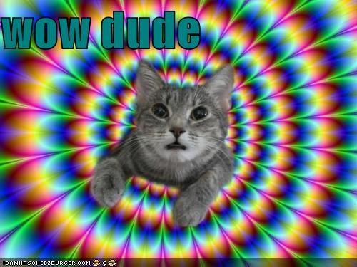 cat,dude,dude what,I Can Has Cheezburger,kaleidoscope,psychedelic,rainbow,trippin,TRIPPING OUT,whats-happening,WoW