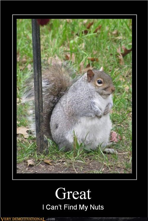 hilarious nuts nutty professor puns squirrel - 5106855680