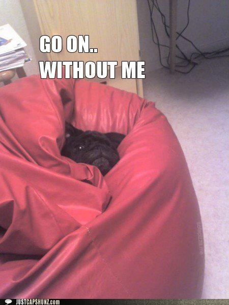 animals beanbag dogs go on halp i has a hotdog save yourselves swallowed - 5107738368