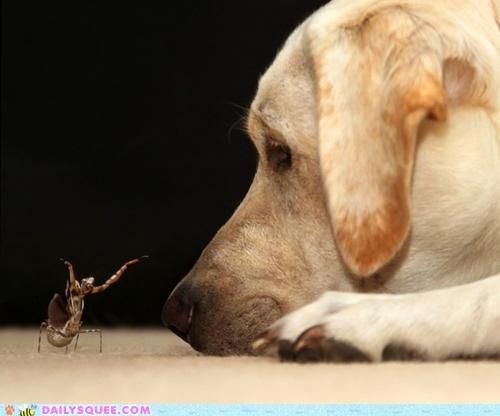 acting like animals Hall of Fame labrador praying mantis threat warning - 5107951104