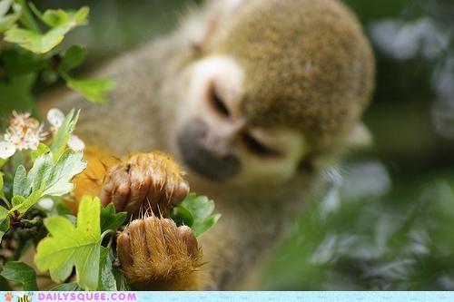 acting like animals bad decisions examining fixing garden gardener gardening green thumb ignorance mistakes monkey planting professional upset - 5107961088