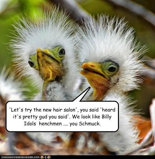 'Let's try the new hair salon', you said 'heard it's pretty gud you said'. We look like Billy Idols henchmen .... you Schmuck.