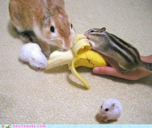 banana,bunny,community,family,gathering,Hall of Fame,hamster,hamsters,nomming,noms,squirrel