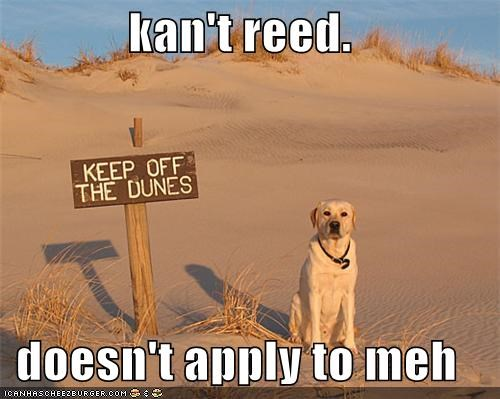 beach,best of the week,dunes,keep off,keep off the dunes,labrador retriever,read,reading,stay off