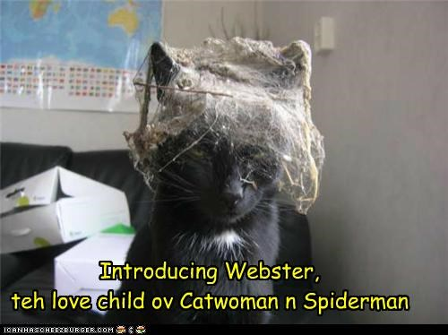 animals Cats catwoman cobwebs dirty I Can Has Cheezburger Spider-Man wtf