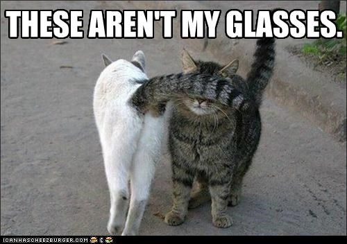 arent caption captioned cat Cats covered eyes glasses my tail these - 5108925440