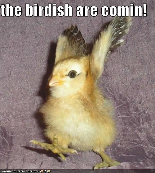 animals birds chicks I Can Has Cheezburger paul revere puns the british are coming - 5109319424